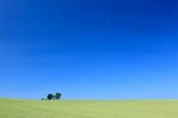 北海道 美瑛町 親子の木と月