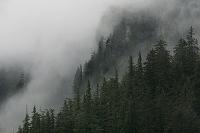 アラスカの森