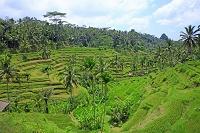 インドネシア バリ島 テガランのライステラス