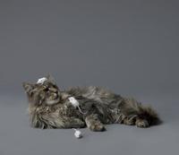 猫とネズミ