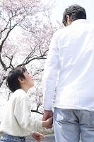 桜並木を手を繋いで歩く父と男の子の後姿