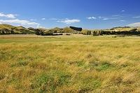 ニュージーランド南島 マールボロ地方 夏の草原
