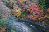 青森県 薬研渓流と大畑川の秋