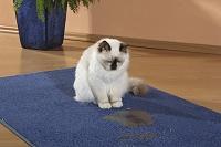 こぼれた水を見つめる猫
