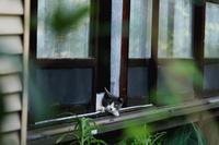 縁側から見つめる猫