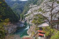 奈良県 桜と瀞八丁とウォータジェット船 瀞峡