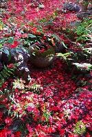 京都 厭離庵の紅葉