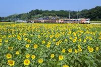 香川県 土讃線 アンパンマン列車