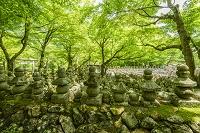 京都府 京都市 化野念仏寺