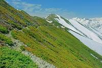 長野県 爺ケ岳のハイマツと登山道