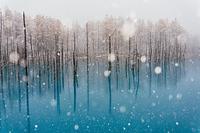 冬の青い池
