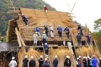 岐阜県 白川郷 結によるかやぶき屋根のふき替え作業