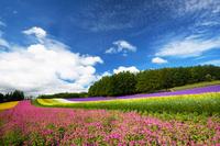 北海道 北のお花畑