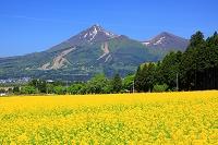 福島県 菜の花と磐梯山