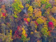 北海道 千歳市 錦秋の林