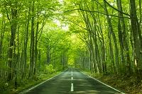 青森県 ブナ林の国道