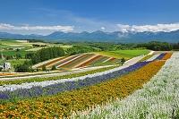 北海道 四季彩の丘と十勝岳連峰