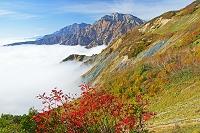 長野県 朝の八方尾根から鹿島槍ヶ岳(左)と五竜岳(右)