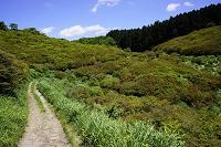 奈良県 葛城山のダイヤモンドトレールと自然ツツジ園