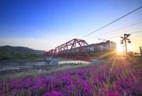 長野県 上田電鉄別所線の電車とシバザクラと夕日