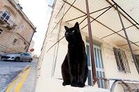 マルタ島 民家と黒猫