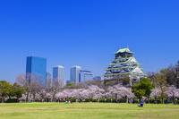大阪府 大阪城と桜