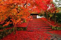 京都府 京都市 安楽寺 参道の散り紅葉