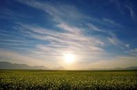南アフリカ共和国  クランウィリアム
