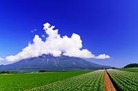 北海道 羊蹄山とジャガイモ畑の丘