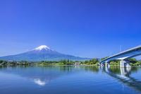 山梨県 新緑の河口湖と富士山