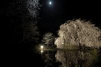 愛媛県 月と相野の花