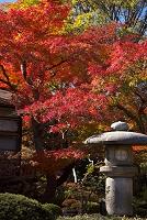 東京都 文京区 小石川後楽園 モミジの紅葉と庭