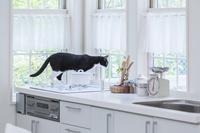 キッチンに乗って窓辺から遠くを見る猫