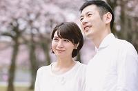 桜を眺める日本人夫婦