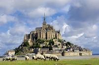 フランス ノルマンディ モン・サン・ミシェル 羊の群れ