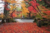 京都府 鍬山神社の紅葉