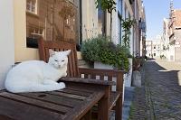 オランダ アルクマール 白猫