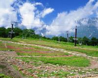 長野県 五竜アルプス山野草園