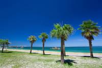沖縄県 アラハビーチとヤシの木