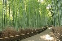 京都府 嵯峨野の竹林の道