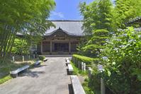 資福寺本堂と紫陽花