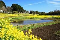 千葉県 市原市 菜の花と小湊鉄道の線路