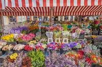 フランス ニース 花市