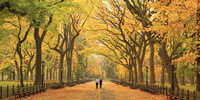 アメリカ合衆国 ニューヨーク市 セントラルパークの紅葉