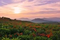 長野県 初夏の霧ヶ峰高原