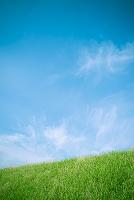 青空と緑の土手