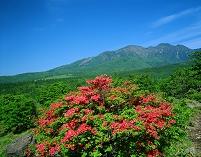山梨県・北杜市 美し森のレンゲツツジと八ヶ岳