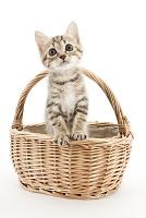 ミックス かごの中の猫
