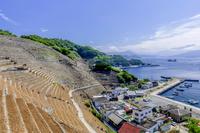 愛媛県 遊子水荷浦の段畑
