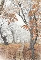 晩秋の檜洞丸